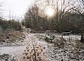 Attenborough Nature reserve - geograph.org.uk - 1062596.jpg