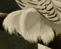 Audubons snowy owl foot.png