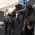 Aujarges Horses 2926.jpg