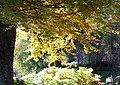 Autumn by the Shin at Achany Glen - geograph.org.uk - 606030.jpg
