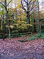 Autumn colours in Wyre Forest - geograph.org.uk - 1577827.jpg