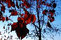 Autumn in iran پاییز در ایران- استان قم 06.jpg
