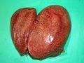 Avian tuberculosis 4.jpg