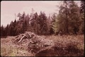 BEAVER LODGE IN THE ADIRONDACK FOREST PRESERVE - NARA - 554607.tif