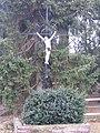 Baarlo - Kruis Heuvel 1.JPG