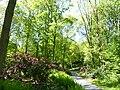 Bad Sassendorf – Kurpark - Rhododendronpark am 6. Mai 2016 - panoramio - giggel (1).jpg