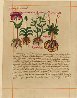 Aztec herbal manuscript