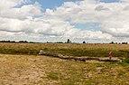 Balloërveld, natuurgebied in Drenthe 003.jpg