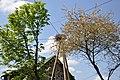 Baltā stārķa ligzda Nr.1070, Mālpils pagasts, Mālpils novads, Latvia - panoramio.jpg