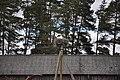 Baltā stārķa ligzda Nr.1725, Skrundas pagasts, Skrundas novads, Latvia - panoramio.jpg