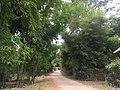Bamboo forest near Inle Lake.jpg