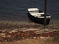 Barco em Genipabu.jpg