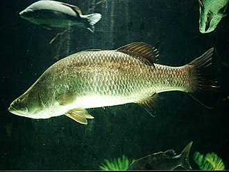 Central Institute of Brackishwater Aquaculture - Asian Seabass