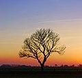 Baum-Ostfriesland-Abend.jpg