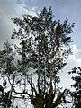 Bayombong,NuevaVizcayajf0212 06.JPG