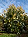 Beale Arboretum acer lawn West Lodge Park - Hadley Wood Enfield London.jpg