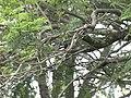 Beautiful tree and a bird in sim's park.jpg