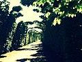 Beautiful walk near Schönbrunn.JPG