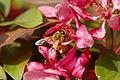 Bee France.JPG