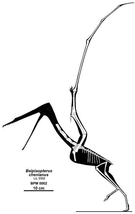 Beipiaopterus