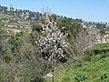 Beit Zayit, Israel - panoramio (8).jpg