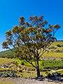 Beni Sidel Loutta (grande arbre).jpg