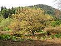 Benmore Botanic Garden (475877557).jpg