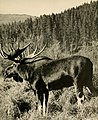 Biennial report of the Montana Fish and Game Commission (1941) (19748760103).jpg