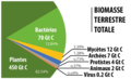 BiomasseTotale.png