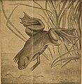 Blätter für Aquarien- und Terrarien-Kunde (1902) (19765539193).jpg