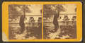 Black Bear, Rocky Point, R.I, from Robert N. Dennis collection of stereoscopic views.png