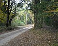 Blakley road2 web.jpg