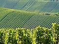 Blick auf die Weinberge von der Burg Stettenfels - panoramio.jpg