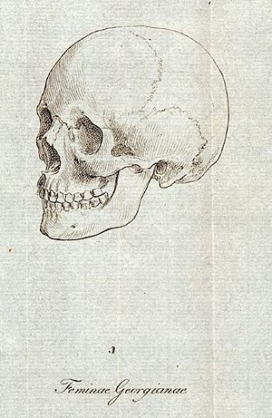 Caucasian race - Drawing of the skull of a Georgian female by Johann Friedrich Blumenbach, used as an archetype for the Caucasian racial characteristics in his 1795 De Generis Humani Varietate.
