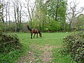 Bolham , Horse in a Field - geograph.org.uk - 1261325.jpg