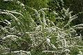 BotGardenFomin DSC 0175-1.jpg