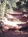 Boynton Canyon Trail, Sedona, Arizona - panoramio (14).jpg