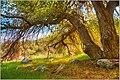 Branches (145403787).jpeg