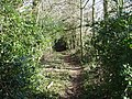 Bratch Lane through Harry's Coppice - geograph.org.uk - 328536.jpg