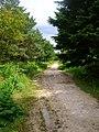 Bridleway, Dallington Forest - geograph.org.uk - 505807.jpg