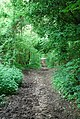 Bridleway entering Cliff Wood - geograph.org.uk - 437891.jpg
