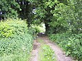 Bridleway near Bloxworth - geograph.org.uk - 457807.jpg