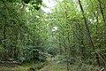 Britty Wood - geograph.org.uk - 31748.jpg
