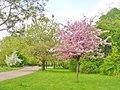 Britzer Garten - Fruehling (Britz Garden - Springtime) - geo.hlipp.de - 36182.jpg