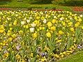 Britzer Garten - Tulipan 2013 - geo.hlipp.de - 36181.jpg