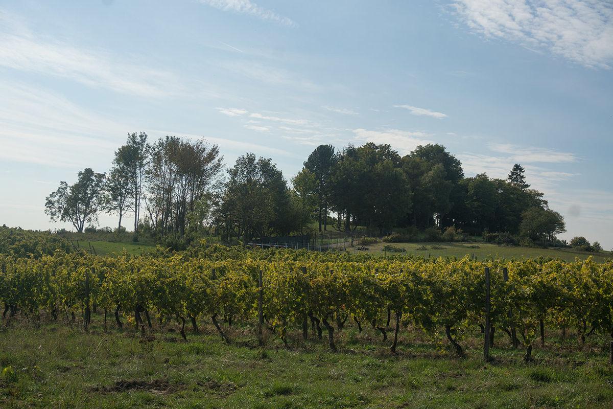 Eltville am Rhein – Reiseführer auf Wikivoyage