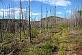 Burnt forest 2 GJ.jpg