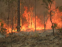 Bush fire at Captain Creek central Queensland Australia..JPG