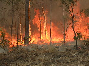 2010–11 Australian bushfire season - Bush fire at Captain Creek central Queensland 2010