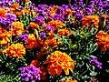 Butchart Gardens - Victoria, British Columbia, Canada (29325649251).jpg